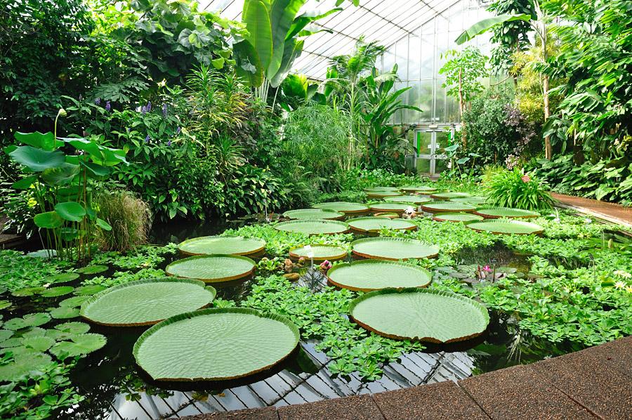 Real jard n bot nico de madrid for Hotel jardin botanico
